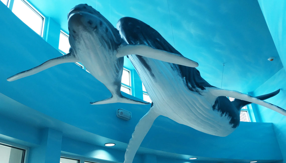 Whale_homepage_mini